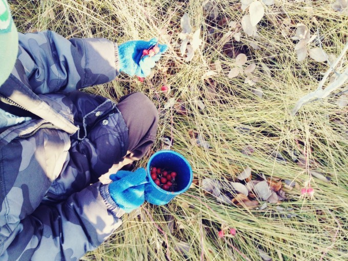 collecting rose hips