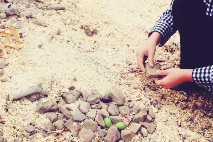 tiny peasant olive plantation 3