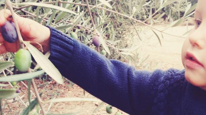 tiny peasant olive plantation 4