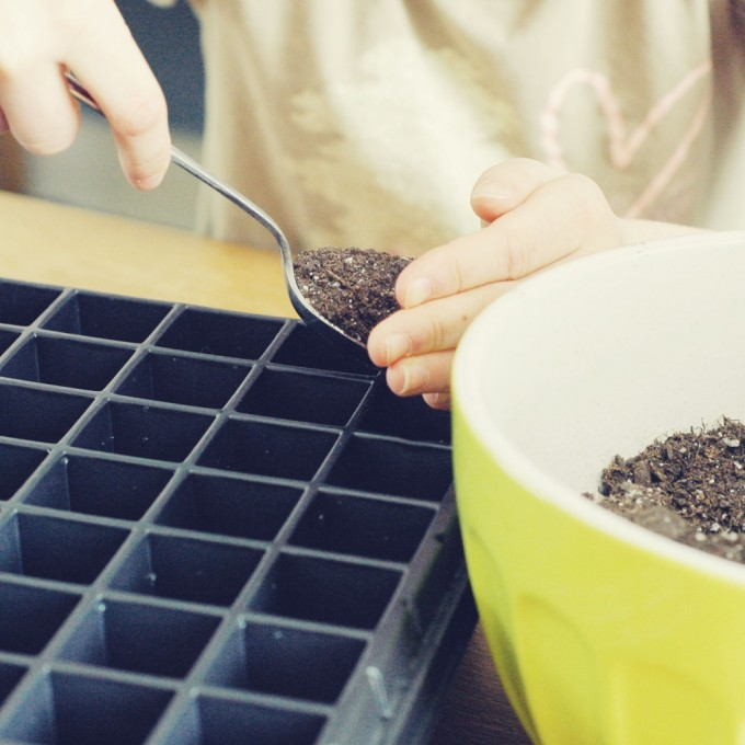 planting sprouts