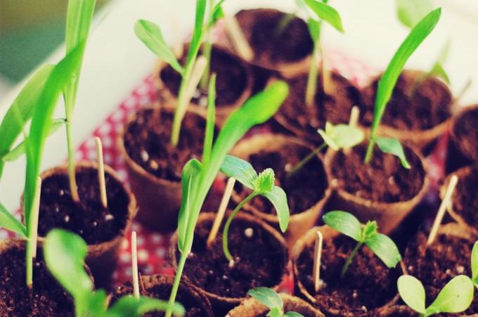 tiny peasant growing seedlings3