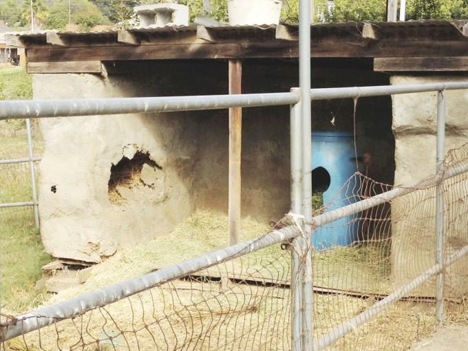 tp fairview goat shelter