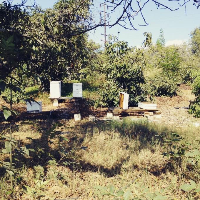 tp fairview hives