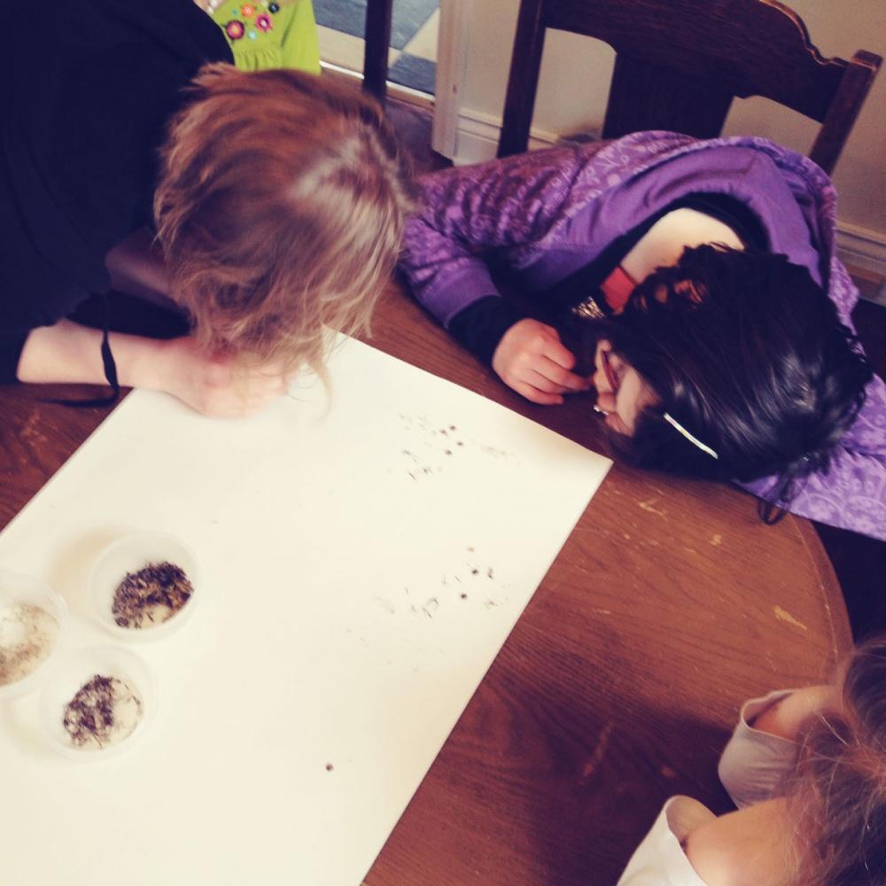 Tiny Peasant Examining Seeds