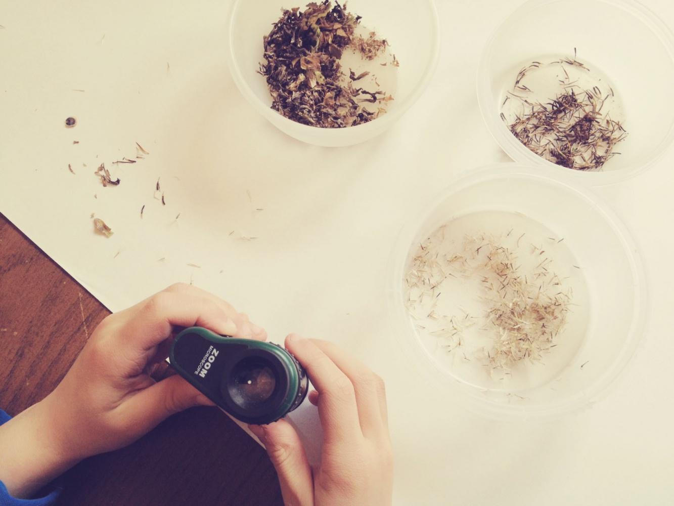 Tiny Peasant Microscope Seeds