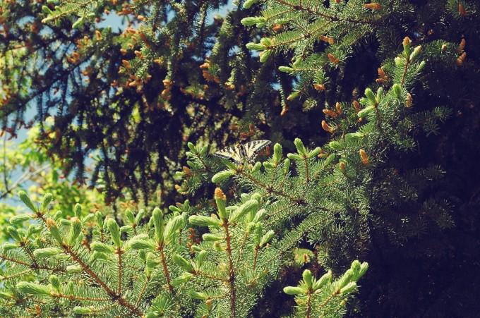 TP butterfly spotting