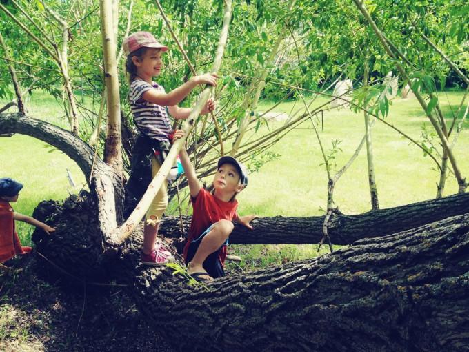 climbing willow