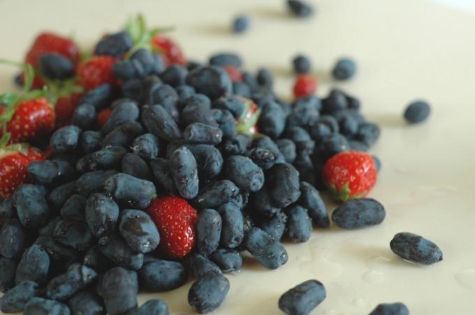 Tiny Peasant Berries for Chia Jam