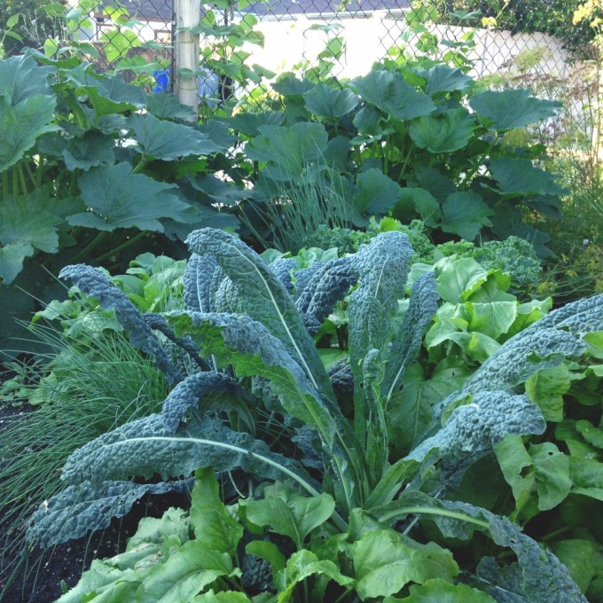 TP kale beets zucchini beans