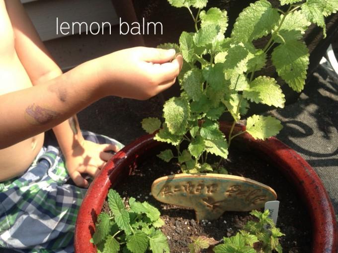 edibles hunt lemon balm