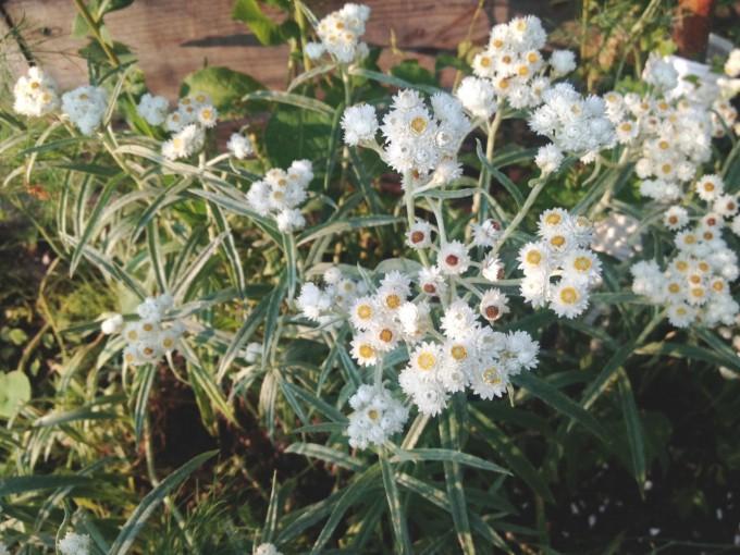 tp gtt native flower
