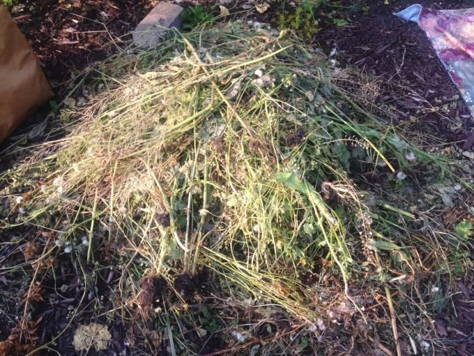 tp gtt weed pile