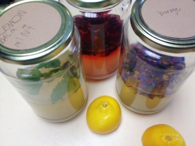 tp lemonade herbal jars