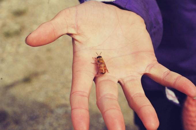 Bre Male Bee