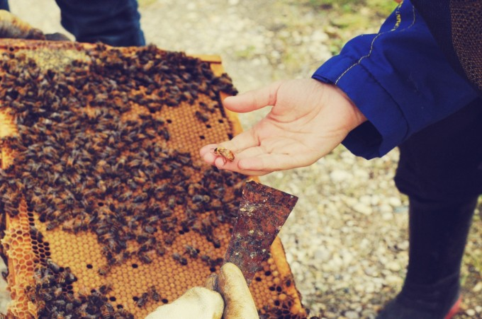 Cohen Male Bee