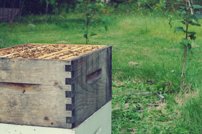 Top Off Hive