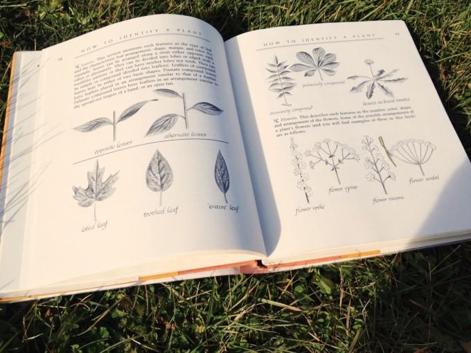 TP wild edibles book