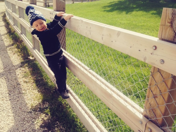 tp market fence