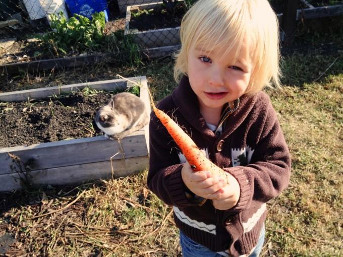 fall carrots2