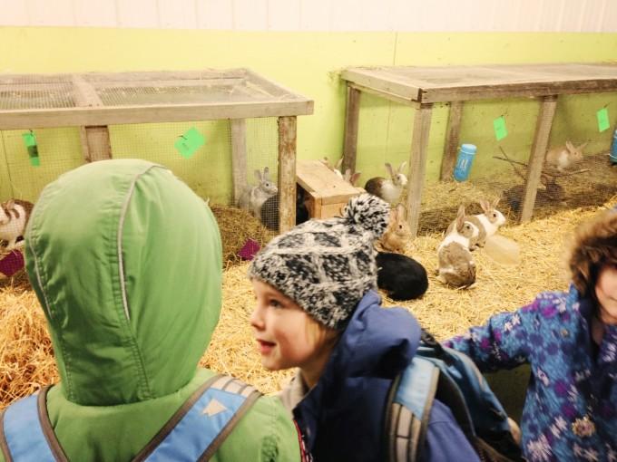 TP fort whyte rabbits