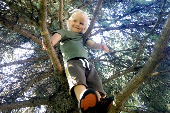 milo up a tree