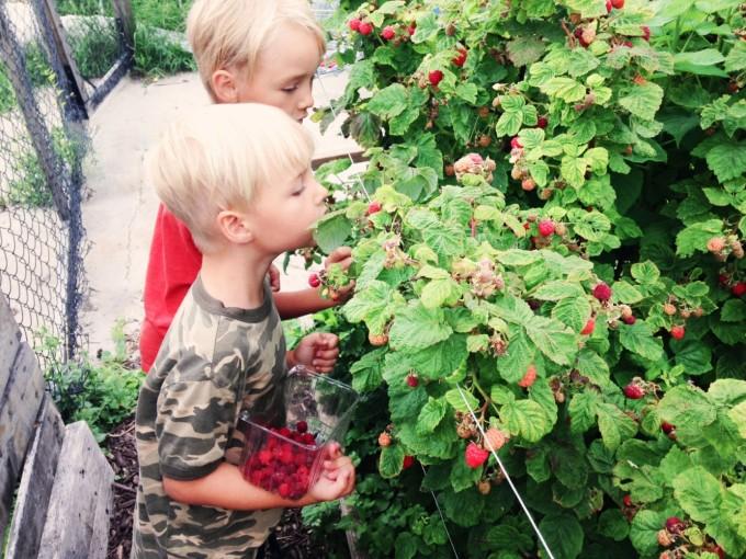 July Berries 2015