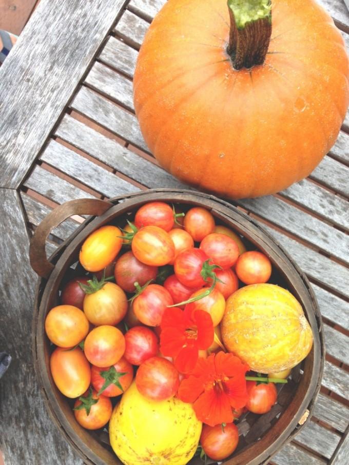TP September Harvest