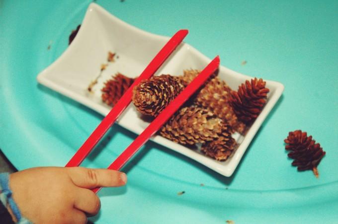 TP transfering pine cones