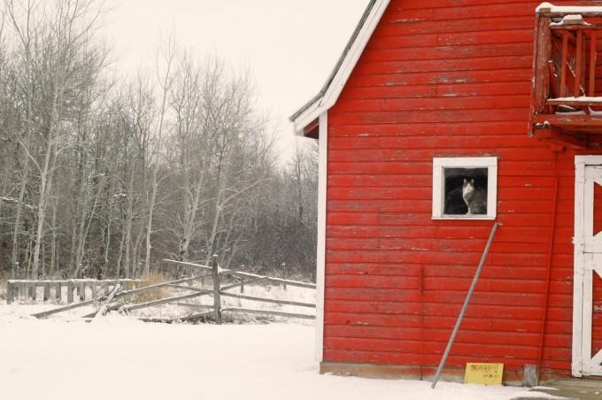 TP tree trip barn
