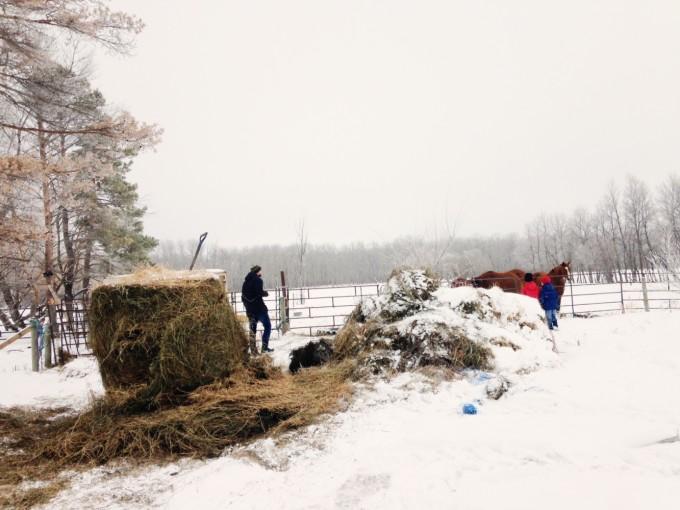 TP farm hunt horses