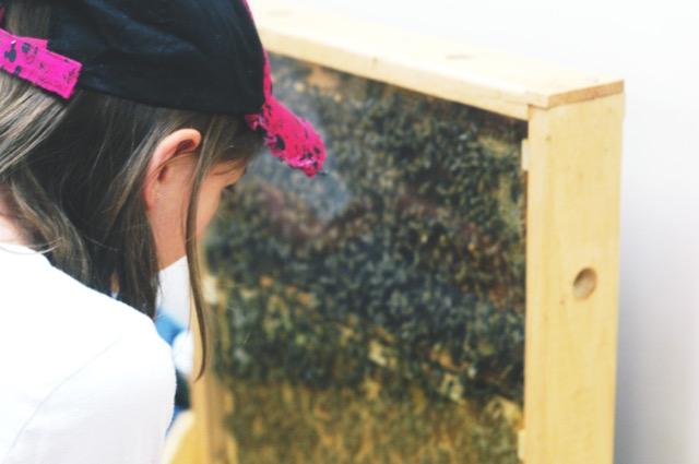 TP BPA Observation Hive