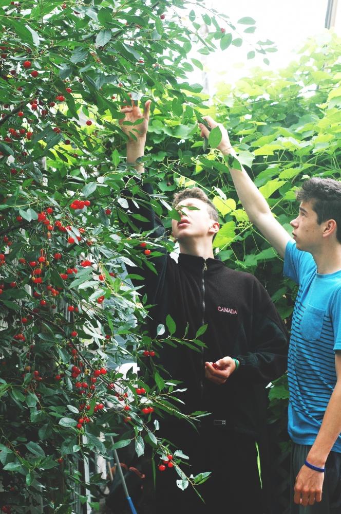 TP romance cherry picking