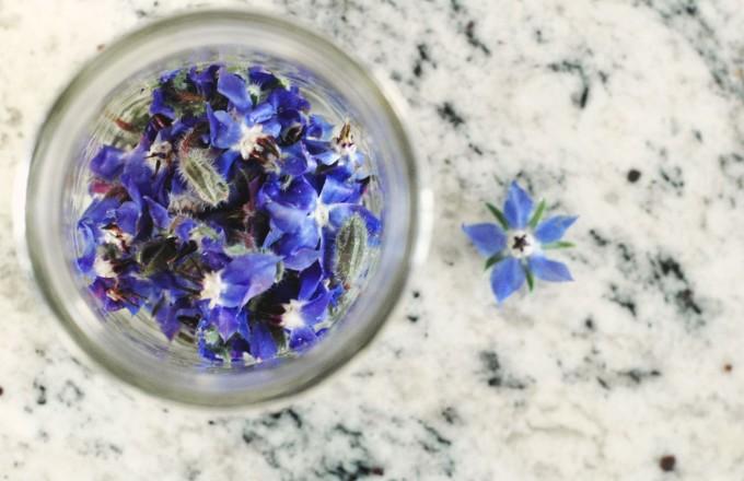tp-borage-flowers