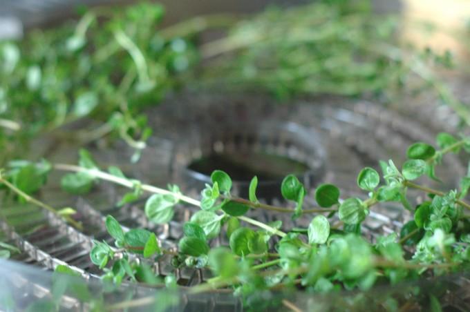 tp-dehydrating-garden-herbs