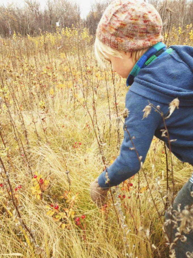tp-forest-hip-harvest