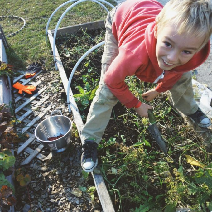 tp-garden-clean-up-co